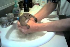squirrel_bath
